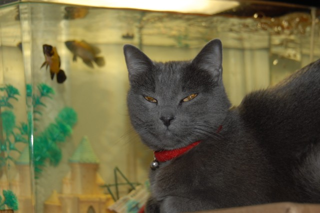 Octshun, who was rescued from an auction, promises to take care of the fish while her owner is away.