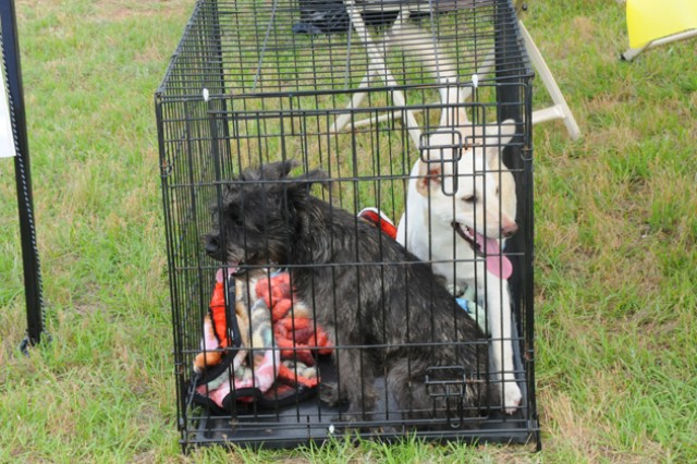 Pepper and Peaches are two of the dogs available for adoption at the Fort Rucker stray facility.