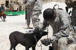 Redeploying Reserve Component Soldiers screened for rabies