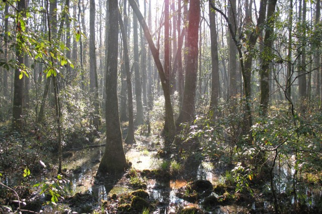 Wetlands, like this one in Fort Stewart's Goshen Swamp,can be beautiful and interesting places to visit.