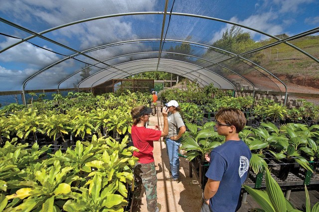 Kim Welch (red shirt), environmental outreach specialist, OANRP, Env. Div., DPW, USAG-HI, leads volunteers on a tour of the upper elevation rare plant nursery in the Waianae mountains. The OANRP staff processes and cares for seeds collected from endangered plants in the wild at the greenhouse. Some of the plants and seeds are stored, while others are planted back into the forest.