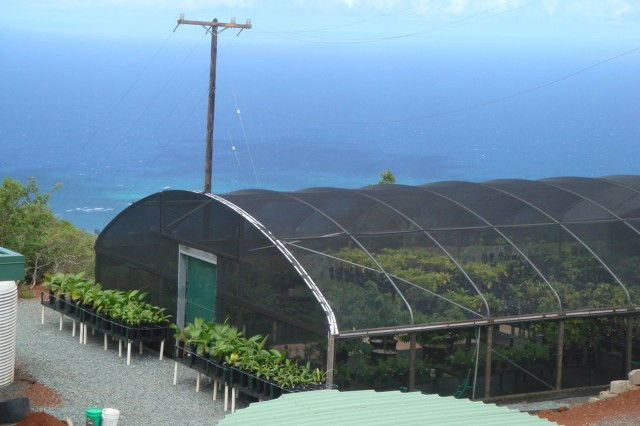 Pictured here is one of three greenhouses on Oahu used by the Natural Resource Team. Oahu NRT members grow common and endangered plants here for reintroduction and reforestation efforts. In the past two years the team has planted more than 8,500 plants.