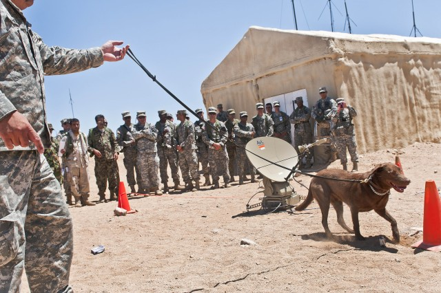 "David Sheffer, a dog trainer with Vohne Liche Kennels in Denver, Ind., leads Coba, a 3-year-old chocolate lab and tactical explosives detector dog, as she sniffs out a sack of explosives residue hidden under a traffic cone June 14 at the National Training Center on Fort Irwin, Calif., during a demonstration of Coba's abilities for 4th Stryker Brigade, 2nd Infantry Division Soldiers, role players and government civilians. Sheffer spent 10 days "" from June 5 to 15 "" escorting Coba to various companies and platoons across the brigade, which will soon select 25 handlers for training to lead a similar dog in Afghanistan when they deploy later this fall."