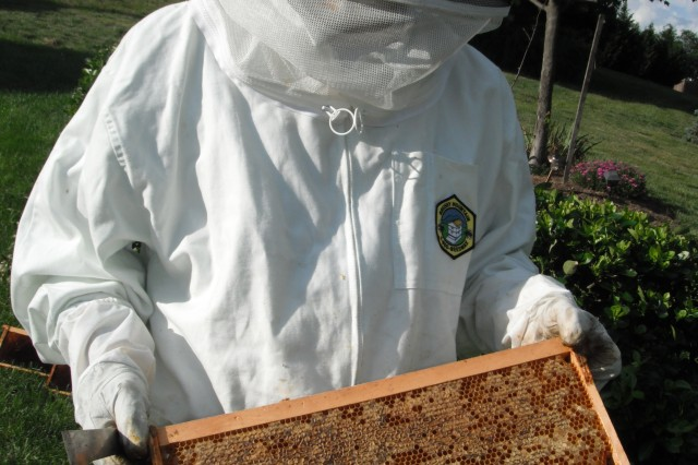 Bill Ryals, dressed in protective clothing and holding a frame pulled from one of his beehives, prepares to remove combs using a hive tool.