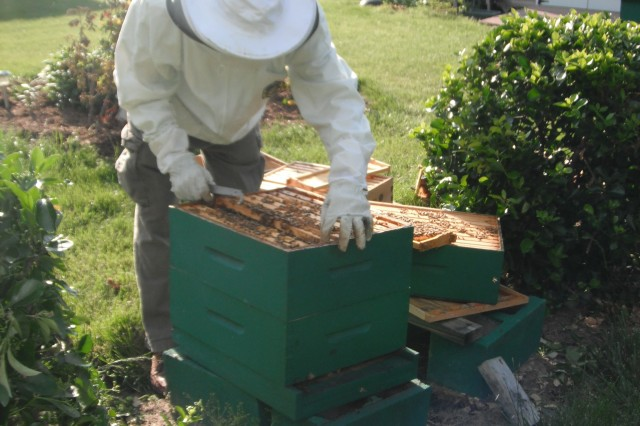 Ryals, in his third year of beekeeping, opens a beehive in his back yard.