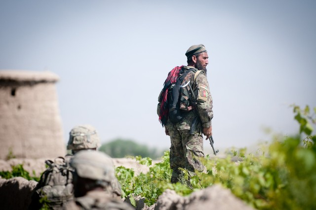 Arabkhan, a platoon sergeant with the Afghan National Army's 3rd Brigade, 203rd Corps, scans a vineyard for Taliban insurgents following a firefight, June 15, 2012, in Ghazni Province, Afghanistan.  Afghan and American forces would reengage the enemy again on the opposite side of the village.