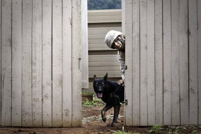 A Marine and his working dog peek through a fence during a human detection scenario during the 2012 Hawaiian Islands Working Dog Competition, held at Pearl City High School, and at Schofield Barracks, Hawaii, June 18-22, 2012. Seventeen teams from across the globe participated in the competition.