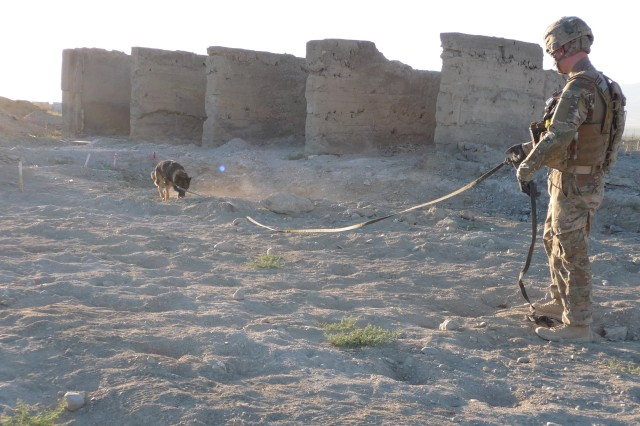 Mine Detection Dog Viktor and his handler conduct mine clearance quality control and quality assurance on Bagram Airfield, Afghanistan, in June 2012.