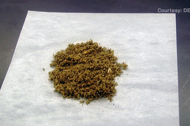 Salvia Divinorum is a naturally occurring hallucinogenic plant compound from the mint family. Spice is a synthetic cannabinoid made up of many different compounds. Both have been misused by Soldiers for their mind-altering or drug-like effects. Secretary of the Army John M. McHugh issued an Army-wide policy prohibiting the use and possession of any synthetic cannabinoid or other marijuana substitute. This includes Salvia Divinorum and Spice.