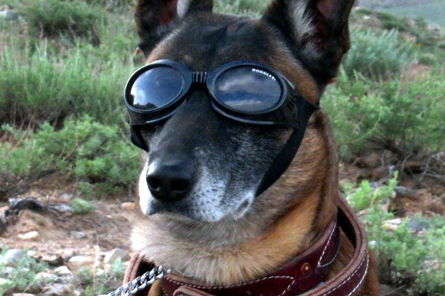 Doggles for military working dogs