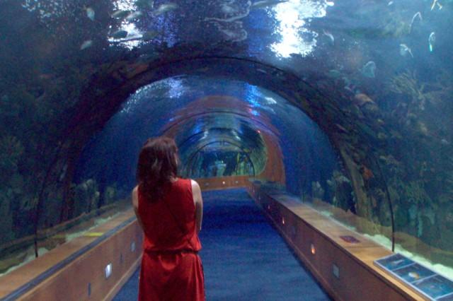 A visitor strolls through the gargantuan aquarium at the Oceanographic.