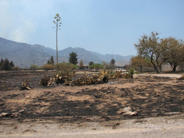 In the aftermath of the Monument Fire.