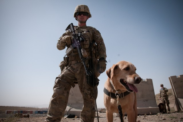 Pfc. John Casey, a military dog handler assigned to the 4th Infantry Brigade Combat Team, 1st Infantry Division, and native of Orting, Wash., gets ready to run his partner Roxy through a training lane on Forward Operating Base Sharana, Afghanistan, Aug. 10, 2012.
