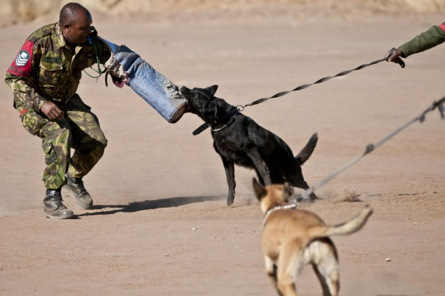 Botswana Defense Force Pvt. Khuta unleashes the fury of his K-9 companion Maja on Staff Sgt. Boipuso Ntlhabang the dog handler instructor for the BDF military police at an obedience and tactics demonstration given for U.S. soldiers with the 949th Medical Detachment Veterinary Services out of Ames, Iowa, Aug. 6. The demonstration was part of a four day cooperative training block that included both hands on and classroom training culminating in this demonstration showcasing the units unique talents. (Photo by Army Sgt. Charlie Helmholt, 139th MPAD)