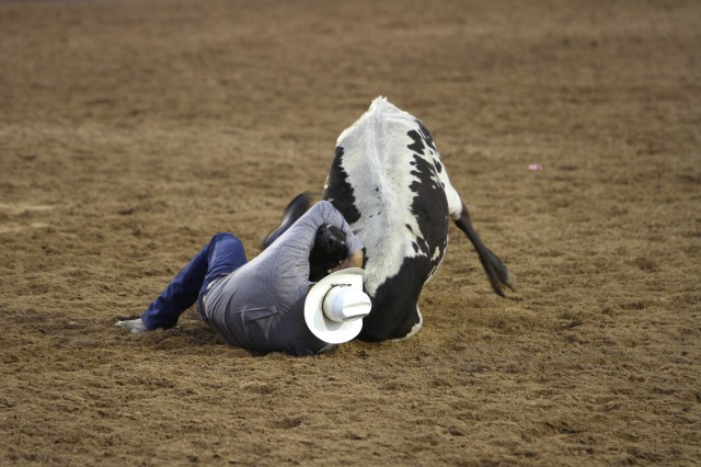 A cowboy successfully wrestles a steer to the ground. Rodeos demonstrate cowboy techniques and tricks with all types of livestock including horses and bulls.