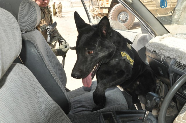Sgt. Adam Serella, a narcotics patrol detector dog handler with the 3rd Infantry Division, and his dog, Nero, search a vehicle during the 563rd Military Police Company's Operation Clean Sweep conducted in districts throughout Kandahar City, Afghanistan, Oct. 3, 2012. This was the first operation a narcotics patrol detector dog was used alongside an explosive patrol detector dog, which enhanced searching capabilities.