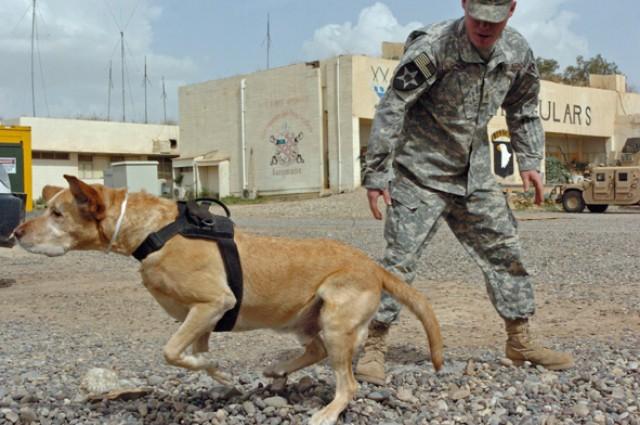 Dog, veteran, hero