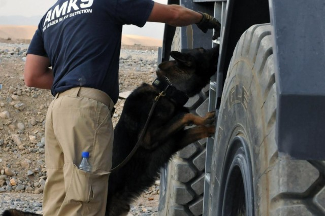 Jaco Kiewiet, an American K-9 Detection Services handler from Johannesburg, South Africa, directs his partner Bongo to check a vehicle for explosives during a training exercise held on Forward Operating Base Lagman, Afghanistan, Oct. 31, 2012.  AMK9 explosives and narcotics dogs are an important part of the force protection measures employed on the base.  The dogs and handlers train six days a week to ensure they are constantly honing their abilities.  (U.S. Army photo by Sgt. Lori Bilyou)