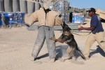 Canines keep soldiers safe, smiling