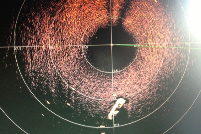 A sonar image of the search area.