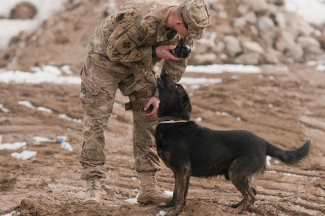 Sgt. Brian Curd, a dog handler, prepares to throw a ball for Staff Sgt. Allen, a mine-detection dog, during a warm-up session in preparation for training at Bagram Air Field, Afghanistan, Jan. 8, 2013. Curd and Allen are both part to the 49th Engineer Detachment (mine dogs) based out of Fort Leonard Wood, Mo., and deployed to detect mines for units and clear minefields.