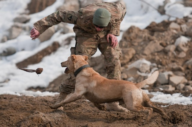 Sgt. Garrett Grenier, a dog handler, and Staff Sgt. Drake, a mine-detection dog, enjoy a game of fetch before training at Bagram Airfield, Afghanistan, Jan. 8, 2013. Grenier and Drake are both attached to the 49th Engineer Detachment (mine dogs) and train daily pending weather and mission tempo. The handlers warm up their dogs with games of tug-of-war and fetch to get them into the training mindset.