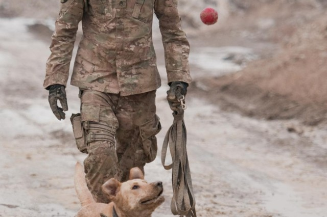 A dog's life: Mine dogs train to save lives