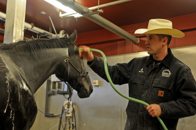 Sgt. Erik Wies, veterinarian assistant with the U.S. Army Caisson Platoon, 3d U.S. Infantry Regiment (The Old Guard), bathes Omar at the Caisson stables on Joint Base Myer Henderson Hall, Va., Jan. 17, 2013. Omar, a 21-year-old Caisson horse with 10 years of service, was recently retired through the horse adoption program.
