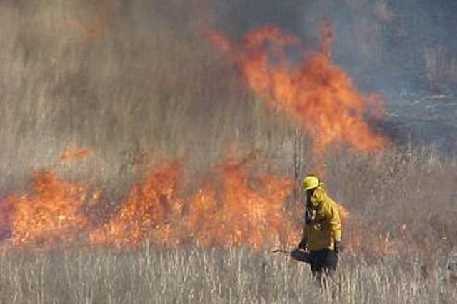 Army announces fiscal year 2012 environmental award winners