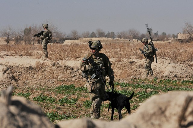 Pfc. Franklin Sena, an infantryman and Tactical Explosives Detection Dog handler with Company C, 4th Battalion, 9th Infantry Regiment, Combined Task Force 4-2 (4th Stryker Brigade Combat Team, 2nd Infantry Division), and his dog, Livee, work together during their first mission as a team during a dismounted patrol, Feb. 7, 2013, in Shubazai, Afghanistan. Sena received nine weeks of training to be a TEDD handler and is currently deployed to Afghanistan in support of Operation Enduring Freedom.