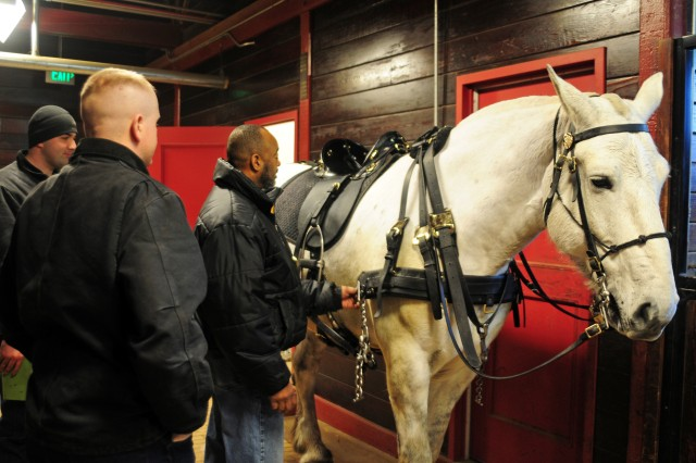 Eugene Burks Jr., senior horse tack specialist, U.S. Army Caisson Platoon, 3d U.S. Infantry Regiment (The Old Guard), makes an equipment adjustment on a Caisson horse, Feb. 20, at the Caisson stables on Joint Base Myer-Henderson Hall, Va. For more than 30 years, Burks has helped Soldiers make any last minute adjustments with the horses' equipment before a day in Arlington National Cemetery, Va. (U.S. Army photo by Sgt. Luisito Brooks)