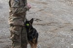 Man's best friend plays pivotal role in IED defeat