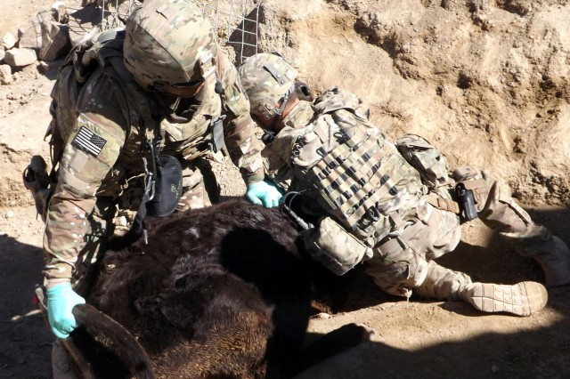 Col. David Powell (left), a veterinarian with Zabul Agribusiness Development Team, and Sgt. Matthew Wilson, an agricultural specialist with Z-ADT, subdue a cow for vaccination and de-worming in Shin Kay district, Zabul Province, Afghanistan, March 4, 2014.