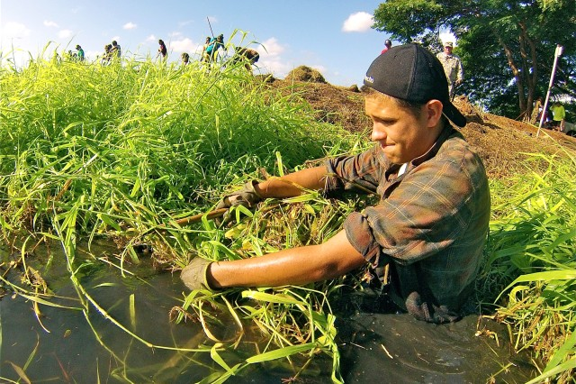 Cadet Sgt. Darius Usborne, Mililani Army JROTC Trojan Bn., reaps California grass as other students from Mililani High School prepare to remove the invasive plant from Pouhala Marsh in Waipahu, Feb. 2.