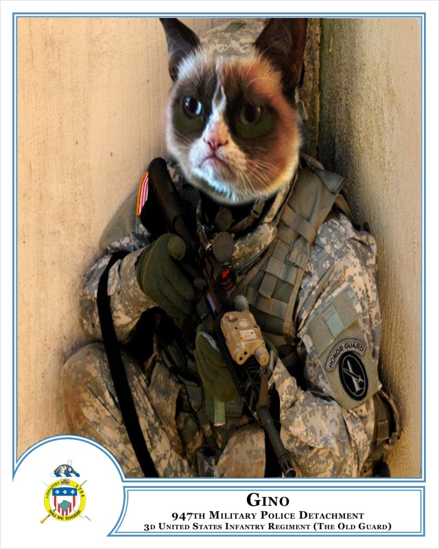 Military working cat program underway at The Old Guard
