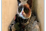 Military working cat program underway at 'The Old Guard'