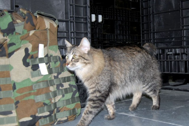 The 3d U.S. Infantry Regiment (The Old Guard), is doing its part to cut down on military spending with the implementation of a new cutting edge program which will use military working cats to work alongside military police.  Pictured here, Wizzo, a military working cat, searches for explosives in a warehouse at Joint Base Myer-Henderson Hall, Va. Wizzo was recruited from Edwards Air Force Base, Calif. There Wizzo served as a rodent deterrent for the base supply warehouse.