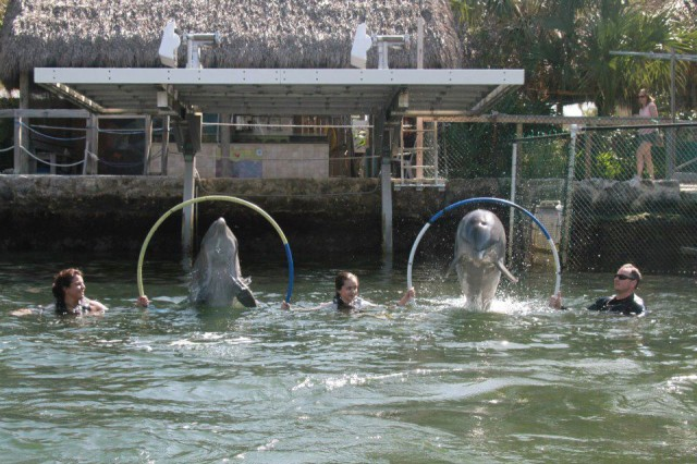The soothing nature of swimming with the dolphins brings peace to the Nelson family.