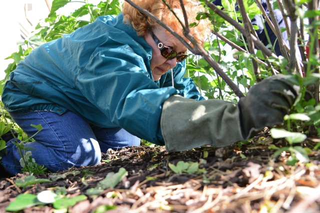 Cheryl Gorhum, a volunteer and master gardener, clears away foliage in one of the flower beds in front of the Warrior and Family Support Center, at Joint Base San Antonio-Fort Sam Houston.