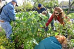 Volunteers clean up gardens at WFSC