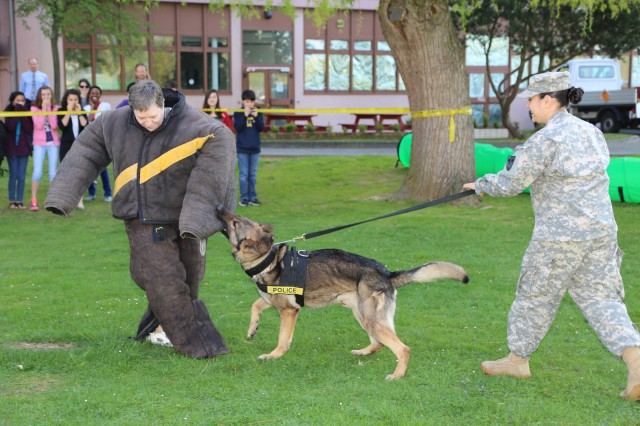 "Wiesbaden Middle School teacher Elaine Young, wearing an attack training suit, plays the role of ""suspect"" April 25 during a military working dog demonstration by the K-9 Unit assigned to the Directorate of Emergency Services at U.S. Army Garrison Wiesbaden, Germany. It was part of ""Take Your Child to Work Day"" at the Amelia Earhart Center, home to the U.S. Army Corps of Engineers Europe District."