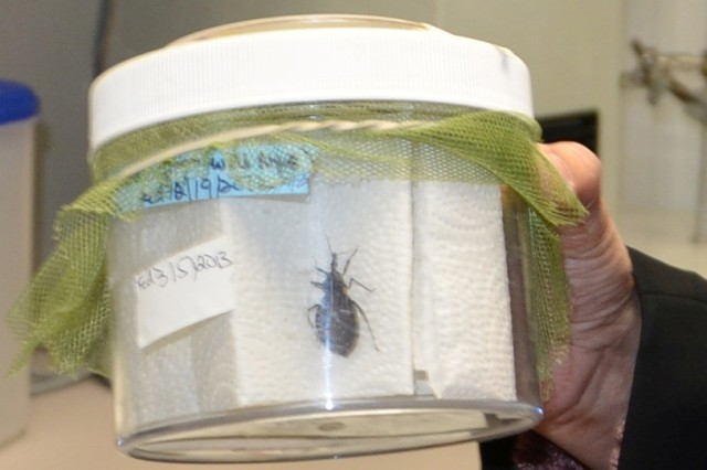 The Triatomine or kissing bug carries a parasite that causes Chagas disease in humans and animals. The Department of Defense Food Analysis and Diagnostic Laboratory at Joint Base San Antonio-Fort Sam Houston is working with veterinarians at the Lt. Col. Daniel E. Holland Military Working Dog Hospital at Joint Base San Antonio-Lackland to test MWDs who have been exposed to Chagas disease, which can affect the dog's heart.