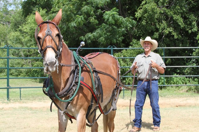 Equine therapy volunteer aids Wounded Warrior recovery, resilience