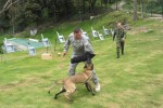Army South Soldiers, veterinarians help partner nations build, sustain working dog programs