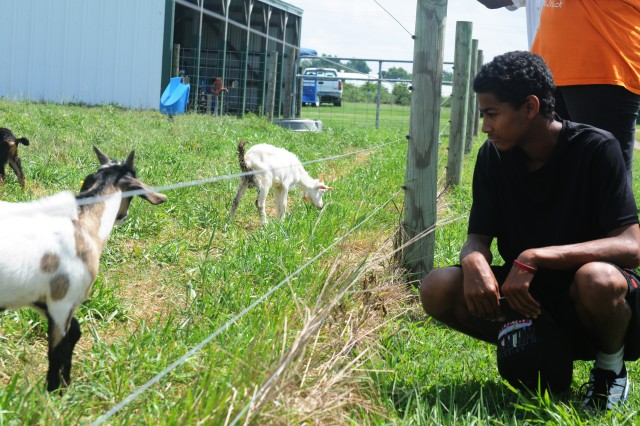 Seventeen year-old Cantrell Curry, son of Sgt. 1st Class Judith Curry, a human resources noncommissioned officer at the 80th Training Command headquarters, Richmond Va., observes a herd of goats during a visit to Randolph Farm Virginia State University College of Agriculture, Petersburg, Va., Aug. 8, 2013. Curry was part of an Army Reserve Child, Youth and School Services sponsored tour that provided a behind the scenes look of the farm's daily operations to seven students ages 13-17 from central and northern Virginia.