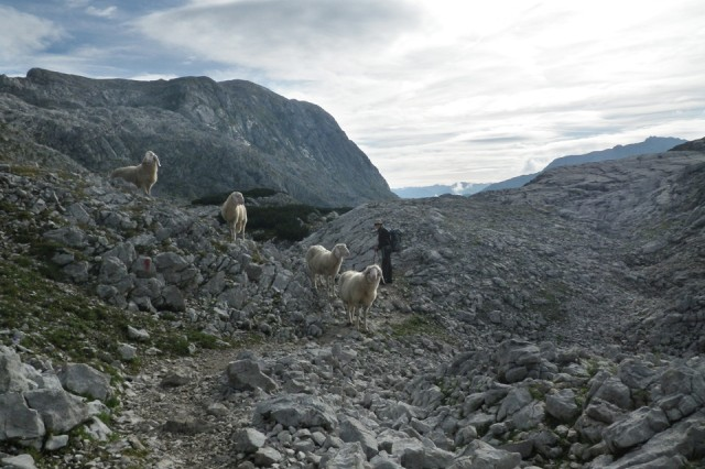 Some furry friends joined us on the trail.