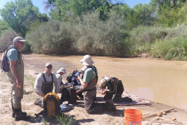 ALBUQUERQUE, N.M., -- (L-R): Mick Porter; Eric Gonzalez; Matt McMillan; Justin Reale; Mike Marcus and Mike Hatch analyze fish from a seine net, Aug. 15, 2013.
