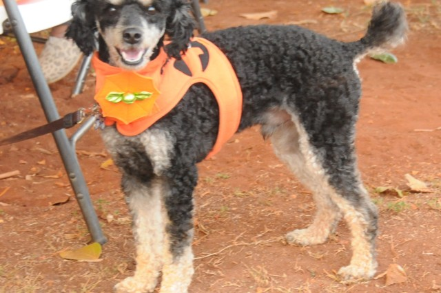 Even pets came out in costume for the HHC/516th Signal Brigade Trunk-or-Treat here on 25 Oct.