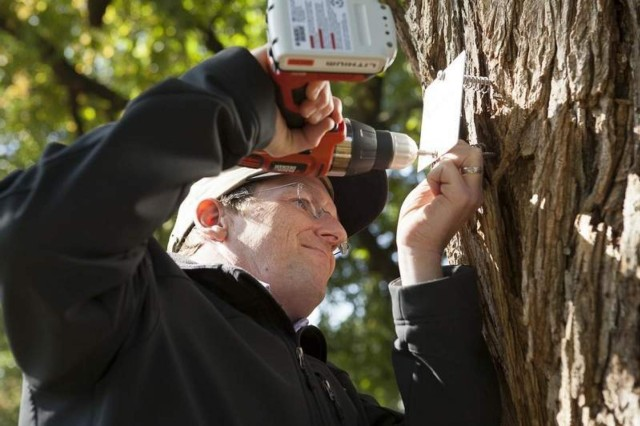 Tree labeling at ANC to continue through November