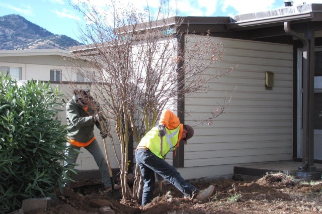From left, Warren Parker and Gerardo Gutierrez, Mountain Vista Communities landscapers, prepare to remove a crepe myrtle tree in preparation for relocation to its new home. The tree had been growing at 132 Madden Street for over 20 years, at the soon-to-be-demolished quarters once occupied by the McCarthy Family who had originally planted the tree.